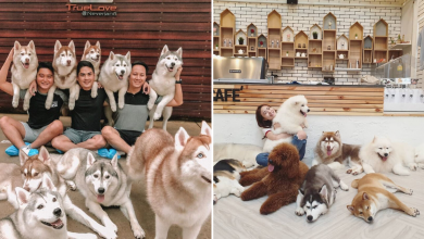 Photo of 10 Pet Cafes In Bangkok That Will Melt Your Heart