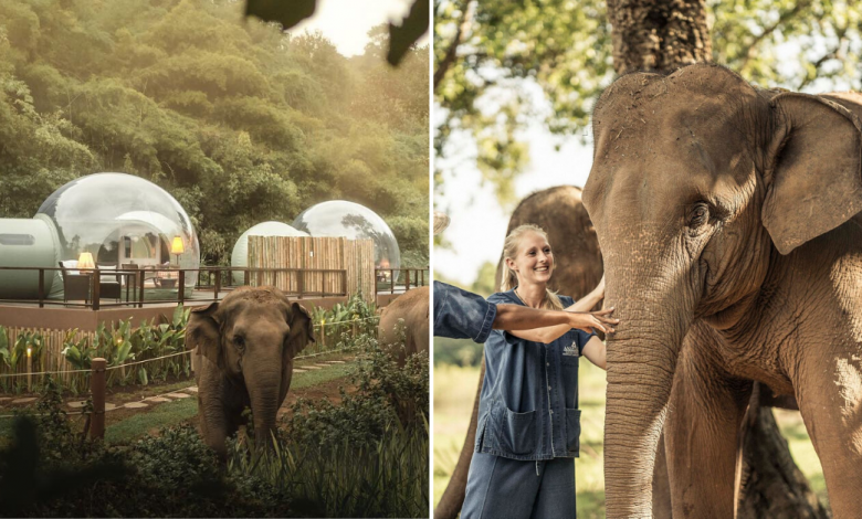 "Photo of This Resort At Chiang Rai Allows Guests To Sleep In ""Jungle Bubbles"" Surrounded By Elephants"