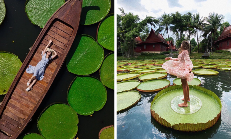 Photo of This Hidden Cafe Has The Most Instagrammable Pond With Giant Lotus Leaves In Phuket