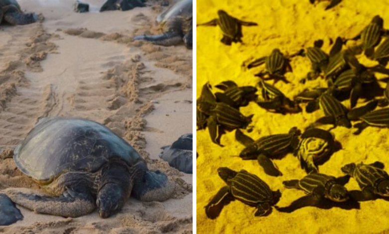 Photo of Thailand Beaches Record The Highest Amount Of Rare Sea Turtle Nests In The Past 20 Years