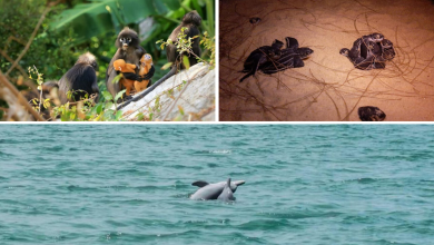Photo of Rare Wildlife Spotted Roaming Freely As Tourist Hotspots In Thailand Empties Out