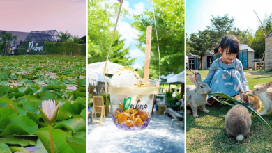 Photo of This Cafe in Thailand Sits Atop of a Lotus Pond and Has an Animal Petting Farm